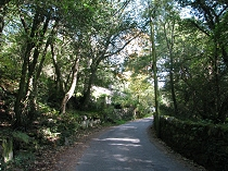 The country lane winds through the trees on the lower       slopes of Elidir Fach