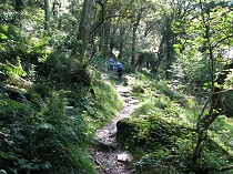 Soon the trail takes to the woodlands of Coed Dinorwig