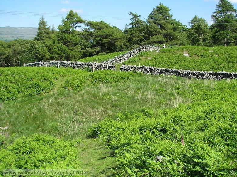 Enlarged picture of Stone Walls and Bracken